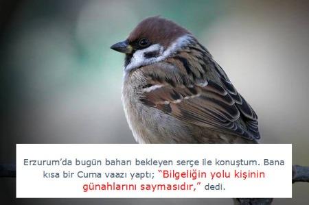 Baykuþ Ve Serçe