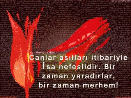 canlar-copy