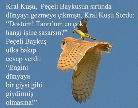 peçeli-paykuş, Küçük kuşun saldırısına uğrayan peçeli baykuş