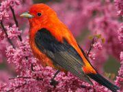 colourful-birds-amazing-tropical-animals-wildlife-photos