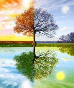 4_Seasons_by_WhiteSpiritWolf4