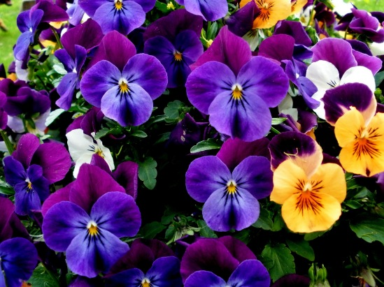 Nature___Flowers_Beautiful_bouquet_of_flowers_pansies_065935_
