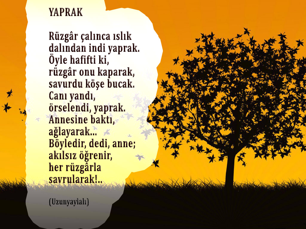 Agac_ve_yapraklari