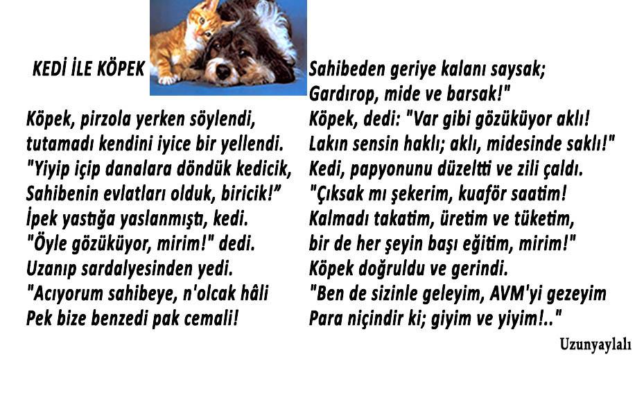 kedi-kopek-dost-3